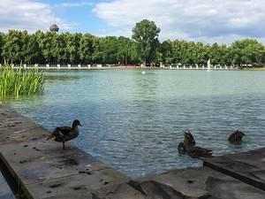 Enten / Vögel baden im angelegten Wasserbecken im Stadtpark