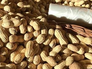 Erdnüsse / Peanuts