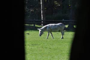 Esel im Lindenthaler Tierpark
