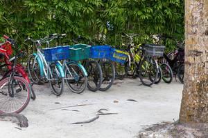 Fahrräder mit Korb auf Gepäckträger im Retrolook auf der Fahrradinsel La Digue in den Seychellen