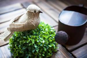 Fake bird and garden watering can
