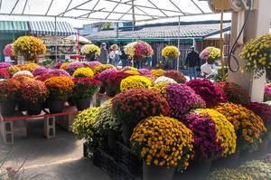 Fall Flower Market (Flip 2019)