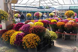 Fall Flower Market