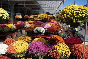 Fall Flowers at the Farmer Market  (Flip 2019)