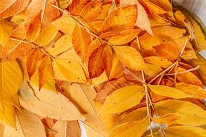 Fall yellow leaves autumn background (Flip 2019)