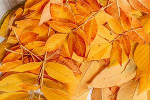 Fall yellow leaves autumn background