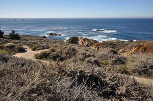 Felsige amerikanische Küste mit rauer Landschaft