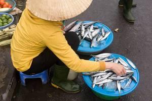Fischverkäufer in Hoi An, Vietnam