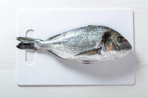 Fish dorado on white background