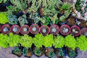 Flatlay von kleinen grünen Pflanzen ind Blumentöpfen