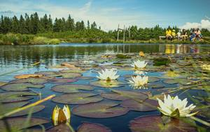 Flowers in the lake