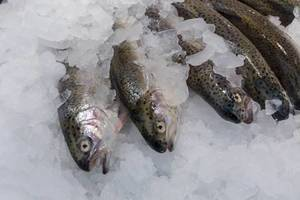 Forellen aus Österreich in einem Fischgeschäft am Naschmarkt