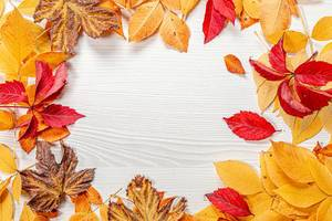 Frame of bright colorful autumn leaves on a white wooden background (Flip 2019)