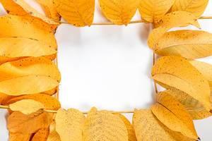 Frame-of-yellow-autumn-walnut-leaves.jpg