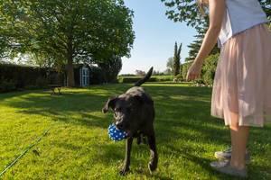 Frau im rosé Tüllrock mit einem schwarzen Labrador Retriever und einem blauen Hundespielzeug-Ball im grünen Garten