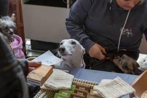 Frauchen mit Hunde in Jacken und mit Schleife am Joveg Hundeseife Stand bei der Hundemesse 2019 in Köln