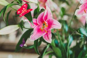 Freigestellte rosafarbene Lilie mit künstlichem Schmetterling