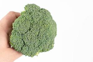 Fresh Broccoli in the hand above white background