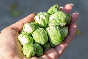 Fresh Brussels sprouts in a woman