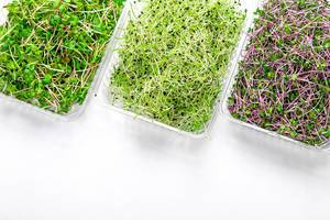 Fresh micro-green cabbage, radish and onion in plastic containers on a white background. Top view (Flip 2019)