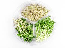 Fresh micro-greens of peas, sunflowers and onions on a white background, top view