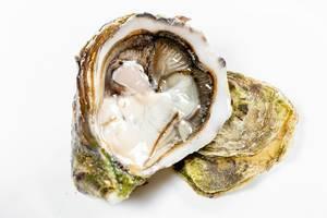 Fresh opened oyster on white background (Flip 2019)