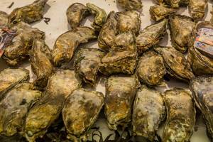 Fresh oysters on sale