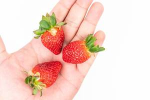 Fresh Raw Strawberries in the hand above white background