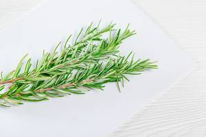 Fresh rosemary branches