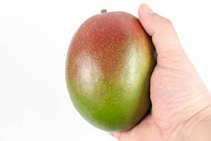 Fresh whole Mango fruit in the hand above white background (Flip 2020)