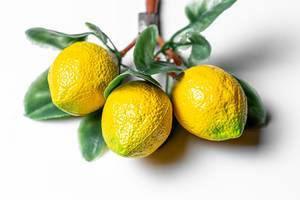 Fridge magnets yellow lemons on a white background (Flip 2020)