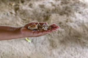 Frisch gemahlene Kokosnuss-Raspeln auf Frauenhand vor weißem Sandstrand der Seychellen