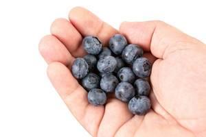 Frisch gepflückte Blaubeeren in einer Hand vor weißem Hintergrund