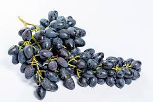 Frische blaue Trauben im weißen Hintergrund