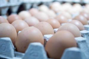 Frische braune Eier in Eierkarton in Verkaufsauslage im Supermarkt mit Schärfentiefe