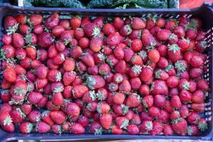 Frische Erdbeeren in Gemüsekiste am Timeout Market in Lissabon