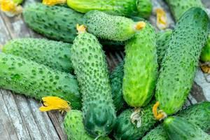 Frische, grüne Gurken liegen auf dem Holztisch im Garten