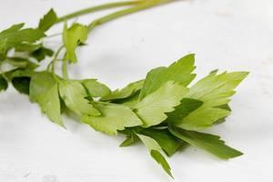 Frische Kräuter / Fresh spices and herbs