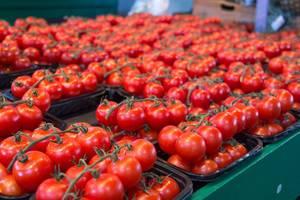 Frische rote Tomaten auf einem Markt