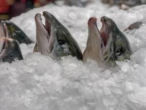Frischer mit Eis gekühlter Fisch auf dem Danilovsky Market in Moskau