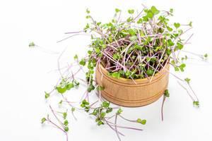 Frisches Mikrogrün-Kohl in einer kleinen Holzschale - Das Konzept eines gesunden, vitaminreichen Salats