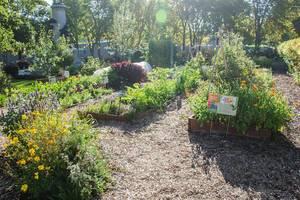 Garten mit Blumen und Gemüsepflanzen