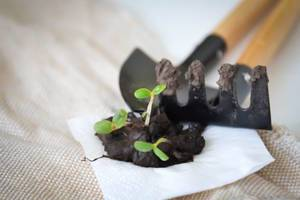 Gartenarbeit: Erste Sprossen