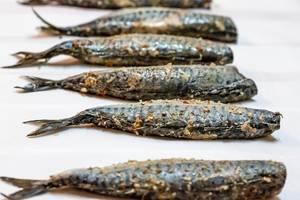 Gefüllte Makrelen liegen in der Reihe auf weißem Hintergrund