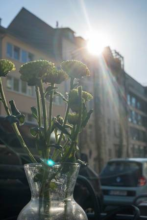 Gegenlichtaufnahme von Blumen in einer Vase