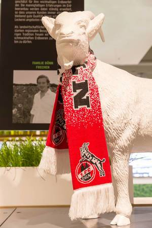 Geißbock Hennes - das Maskottchen des Fußballvereins 1. FC Köln