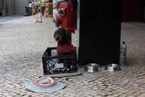 Gekleideter Hund in einer Bierkiste in Lissabon, Portugal