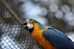 """Gelbbrustara im Vogelpark """"Parque das Aves"""""""