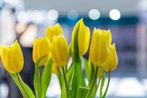 Gelbe Tulpen vor unscharfem Hintergrund
