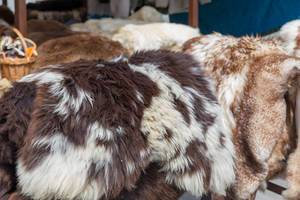 Genuin sheepskins of different colors and patterns